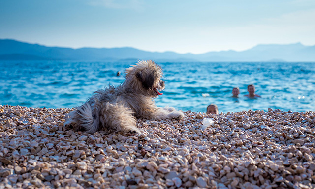 Pet friendly Sol Tours Krk accommodation